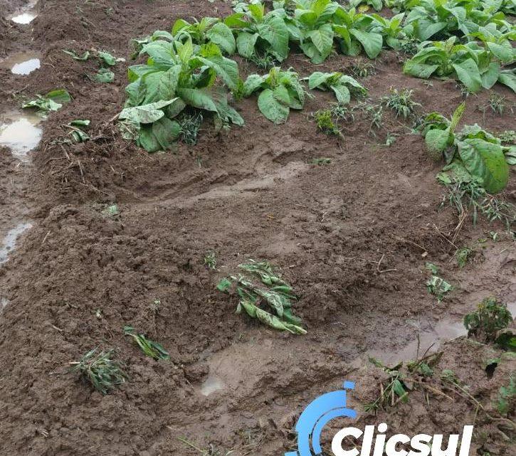 Plantações de fumo e erva mate são destruídas no interior de São Mateus do Sul por veículos