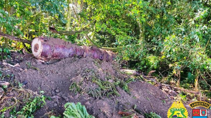 Ocorrência da Polícia Ambiental na Lapa